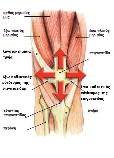 Patellaforces