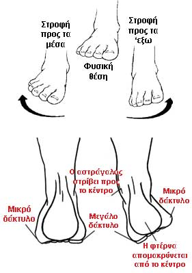 foot-pronation-diagram-1