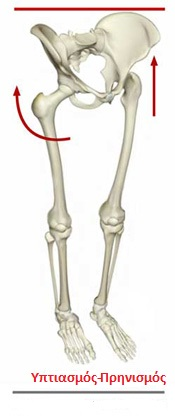 Fig3 skeletalpelvis